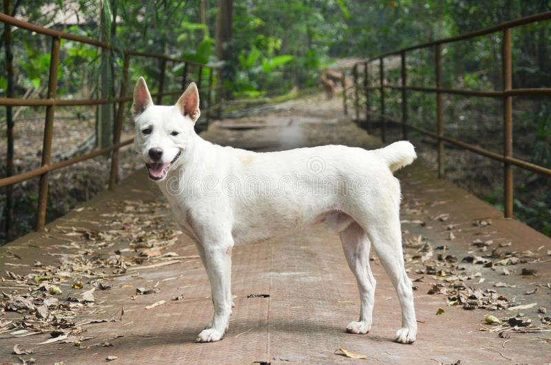 Den vita hunden i natur royaltyfri foto