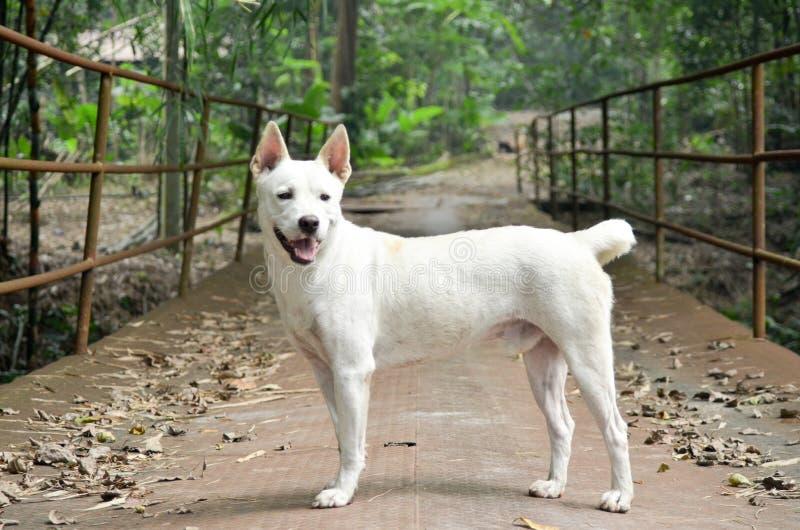 Den vita hunden i natur royaltyfria bilder