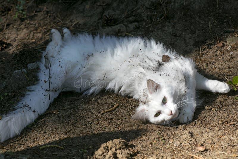 Den vita katten som förbluffar ståendemakrobakgrund, tapetserar högkvalitativa konsttryck royaltyfri fotografi