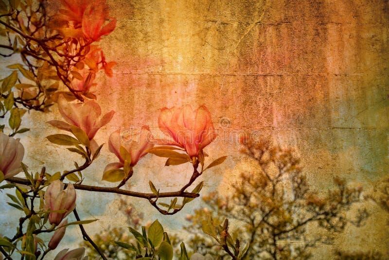 Den vita magnolian blomstrar på trädet royaltyfri bild
