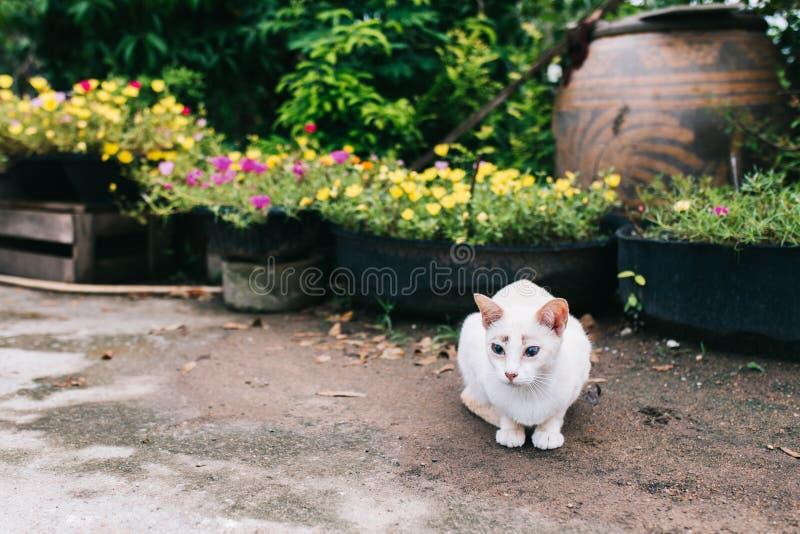 Den vita shorthairkatten lägger på golvet i trädgården royaltyfri foto