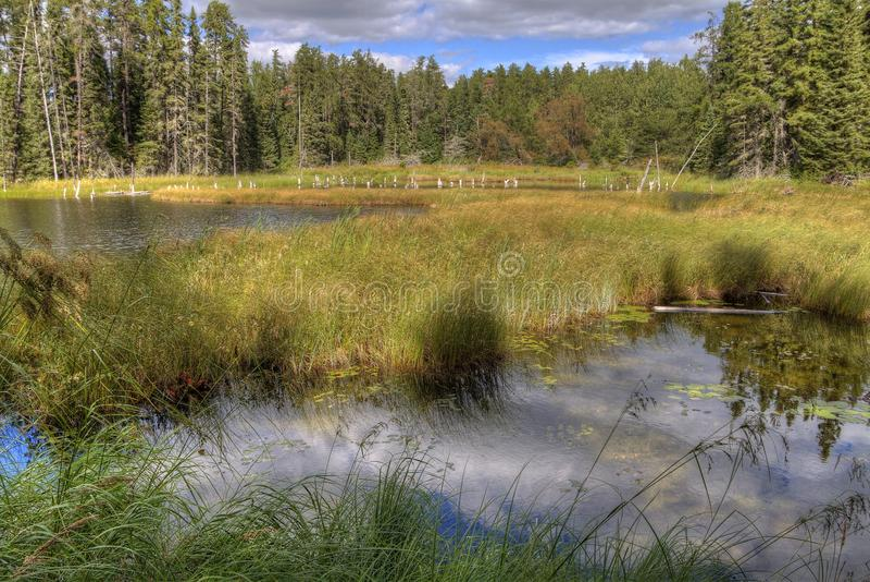 Den vita sjön provinsiella Park är isloated parkerar lokaliserat nära Mobert och White River royaltyfri fotografi
