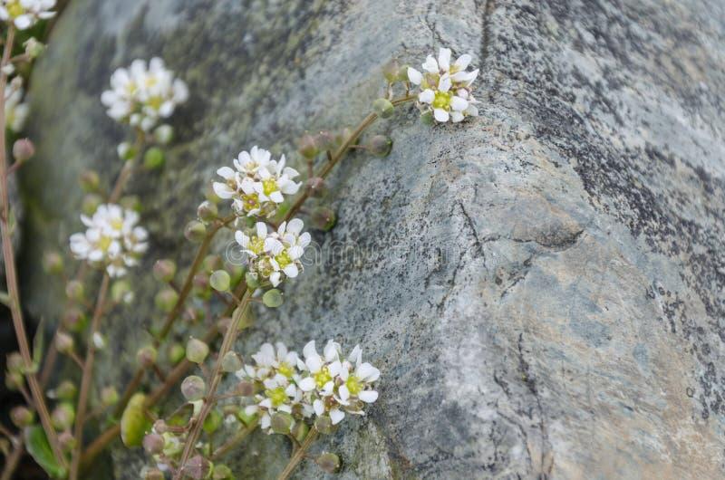 Den vita stranden blommar tätt upp arkivfoton