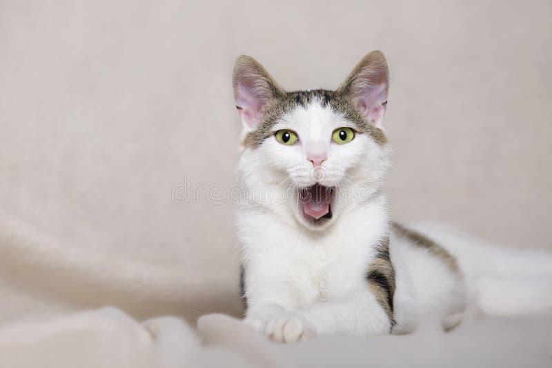 Den vita unga katten gäspar arkivfoto