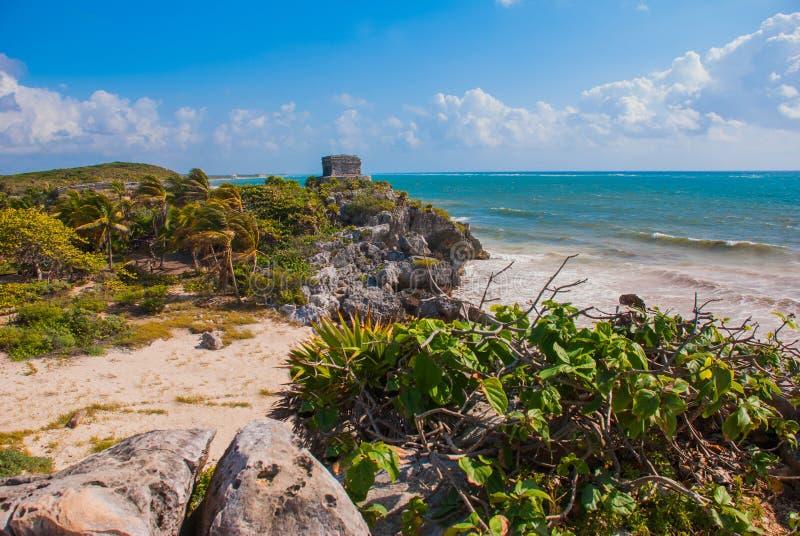 Den vitt sandiga stranden, palmträd, palmliljaväxter och Mayan fördärvar i bakgrunden Riviera Maya på det karibiskt Tulum Yucatan royaltyfri fotografi