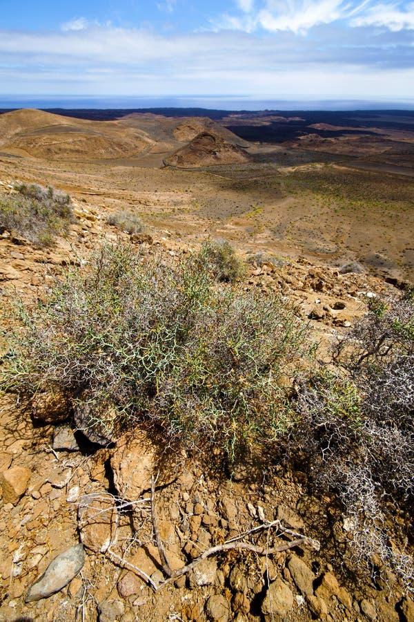Den vulkaniska blommabusken vaggar den stenSpanien växten arkivbild