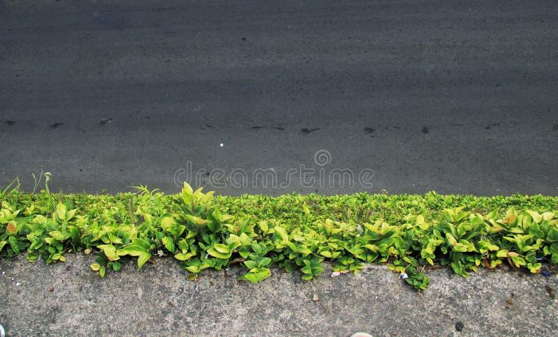 Den wal för väg gräsplanen nära royaltyfria bilder