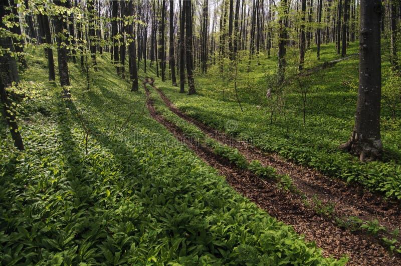 In den Wald lizenzfreies stockfoto