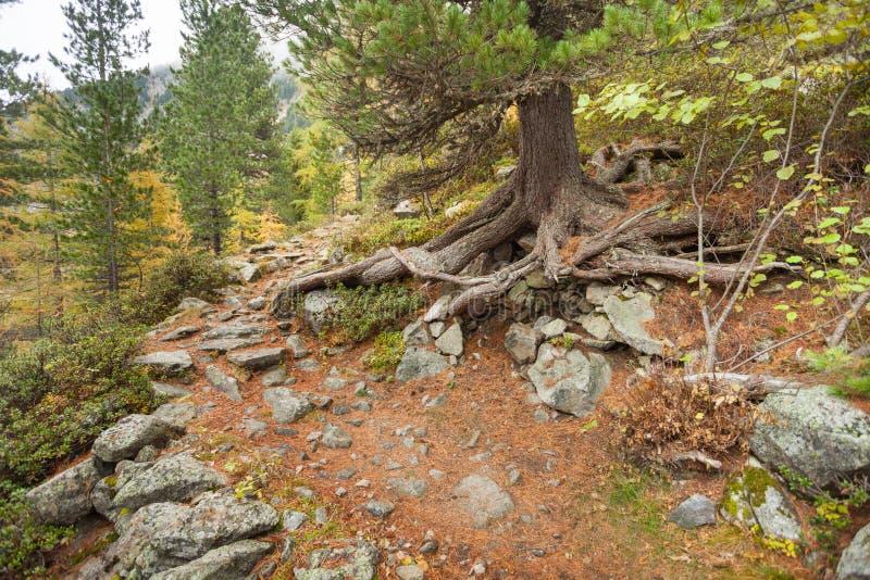 In den Wald lang gehen ein Weg an einem bewölkten Tag Keine Leute a lizenzfreie stockfotos