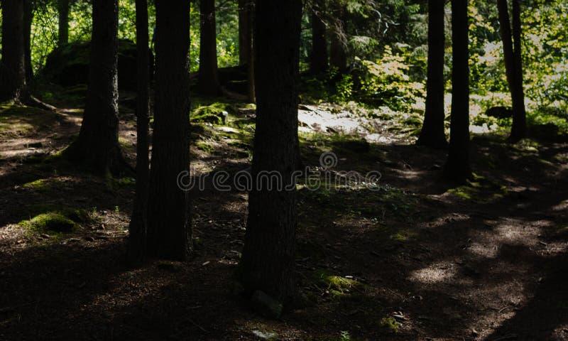 In den Wald lizenzfreie stockfotos