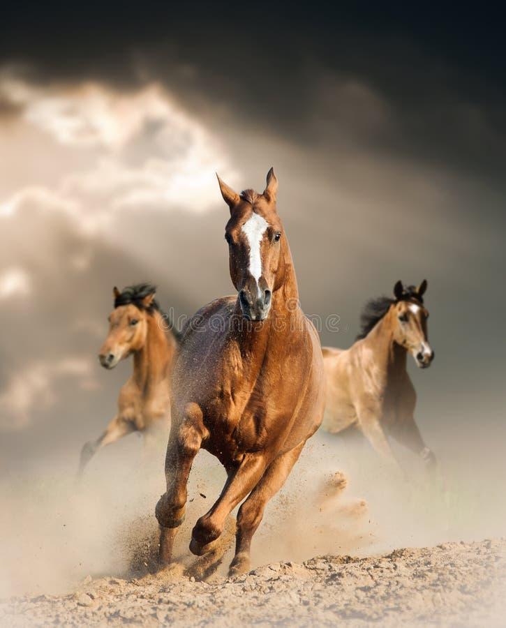 Den Wild hästen dammar av in royaltyfri bild