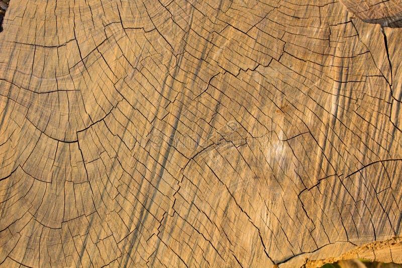 Den Wood bakgrunden, Wood yttersida, Wood textur royaltyfri foto