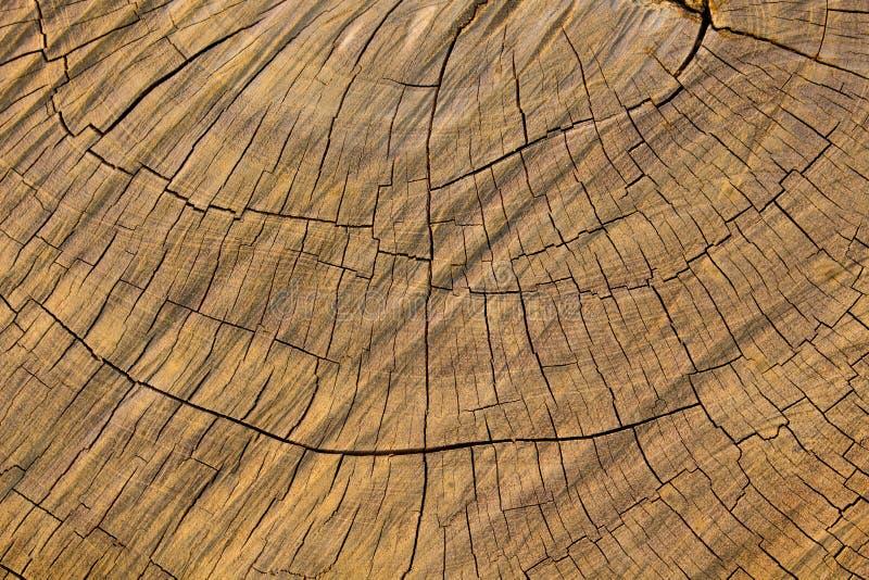 Den Wood bakgrunden, Wood yttersida, Wood textur royaltyfria bilder