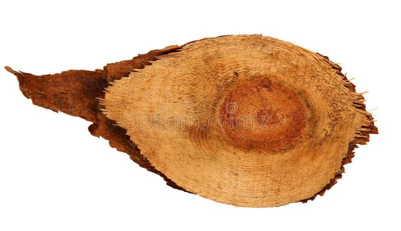 Den Wood journalskivan cutted trädstammen som isolerades på vit, bästa sikt royaltyfria foton