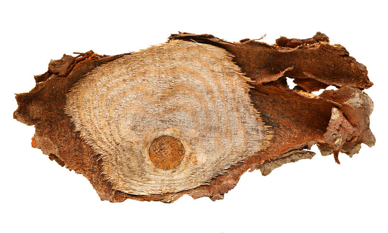 Den Wood journalskivan cutted trädstammen som isolerades på vit, bästa sikt royaltyfri foto