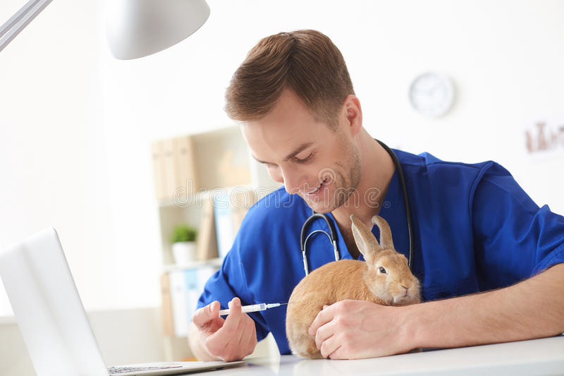 Den yrkesmässiga manliga veterinären kurerar ett djur royaltyfria foton