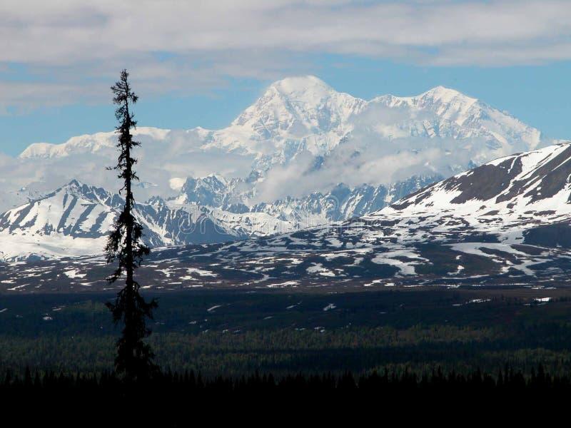 Denali - Αλάσκα στοκ εικόνες