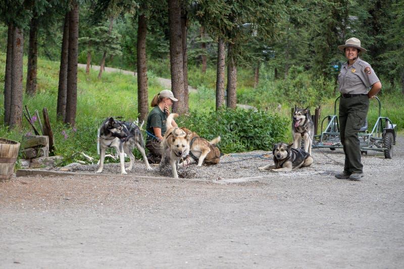 DENALI, ALASKA : Démo de chien de traîneau de giva de gardes forestières de National Park Service en parc photo stock
