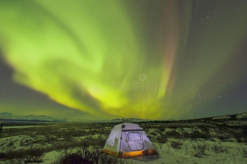 Denali-Aurora stockfotos