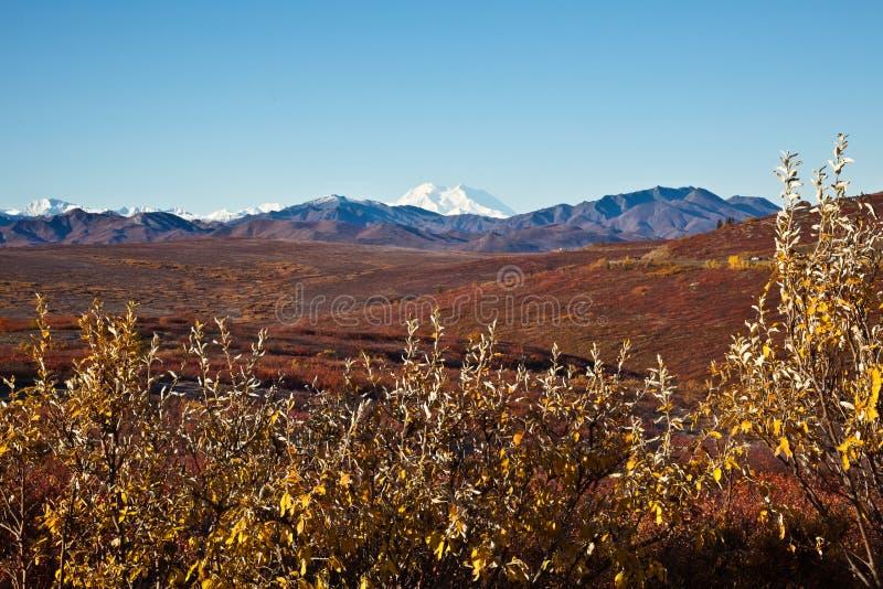 Denali In Autumn Stock Images