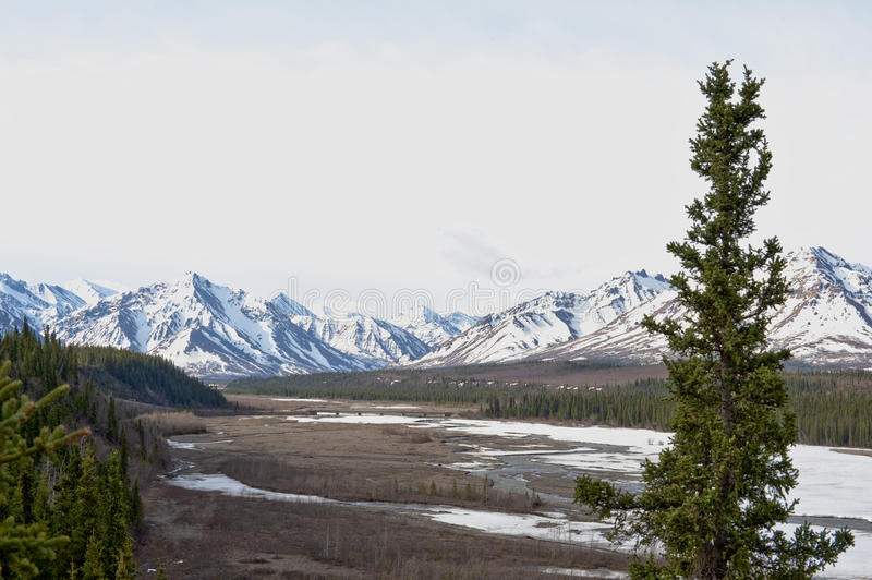 Denali Nationalpark stockfoto