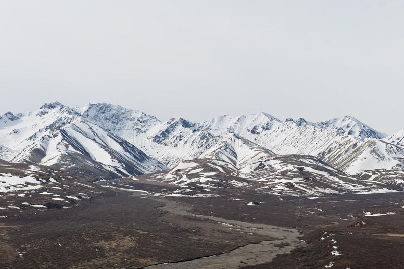 Denali Nationalpark stockbilder