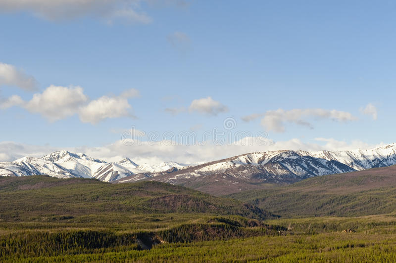 Denali Nationalpark stockfotografie