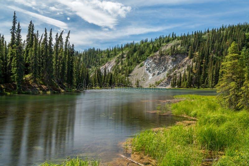 Denali nationalpark Alaska royaltyfri fotografi