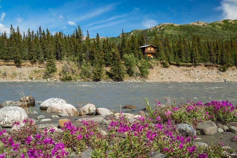 Denali nationalpark Alaska royaltyfri bild