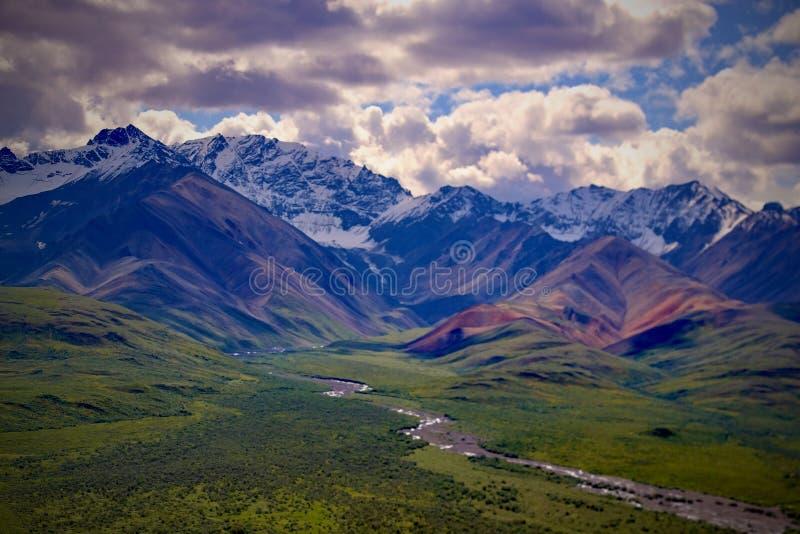 Denali nationalpark och sylt fotografering för bildbyråer