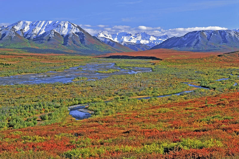 Denali park narodowy Alaska fotografia stock