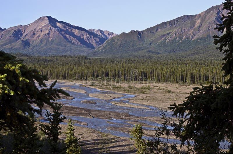 Denali Park-Tundra lizenzfreies stockfoto