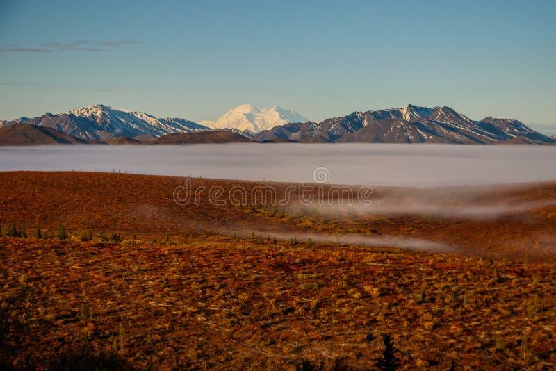 Denali parka narodowego tundra przy mgłowym rankiem, Alaska fotografia stock