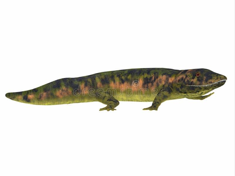 Dendrerpeton amfibisk sidosikt fotografering för bildbyråer