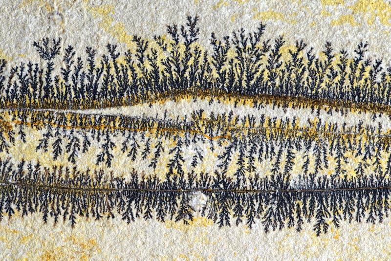 A dendrite na rocha da pedra calcária de solnhofen fotos de stock