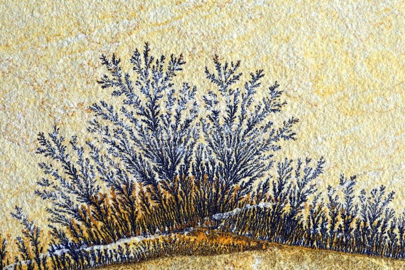 A dendrite na rocha da pedra calcária de solnhofen imagem de stock