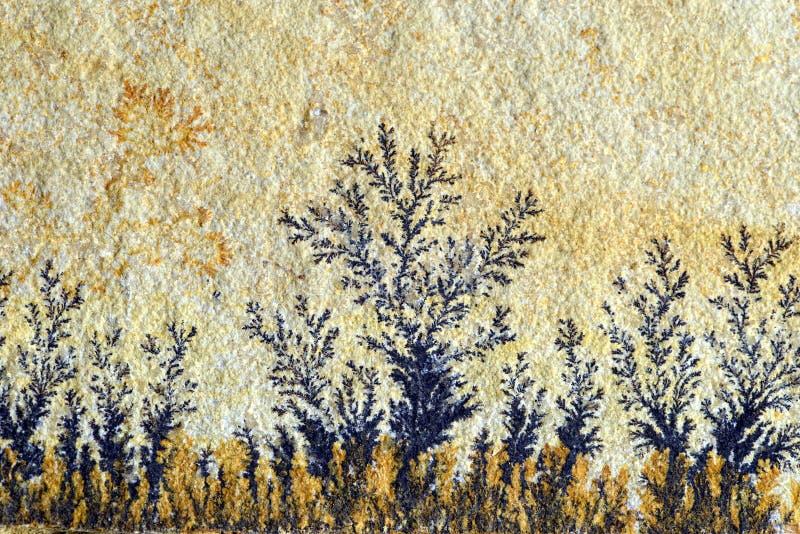 A dendrite na rocha da pedra calcária de solnhofen imagens de stock