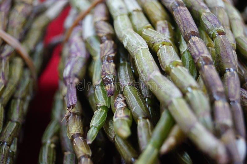 Dendrobium photo libre de droits