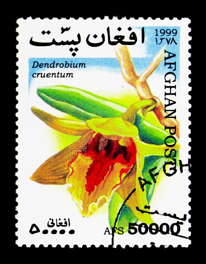 Dendrobium cruentum - Blood Red Dendrobium, Orchids serie, circa. MOSCOW, RUSSIA - DECEMBER 21, 2017: A stamp printed in Afghanistan shows Dendrobium cruentum royalty free stock images
