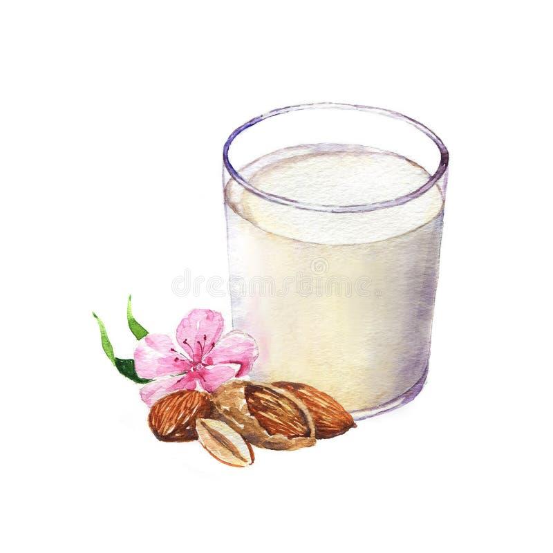 dendrog vattenfärgillustrationen av mandeln och exponeringsglas av mandeln mjölkar vektor illustrationer