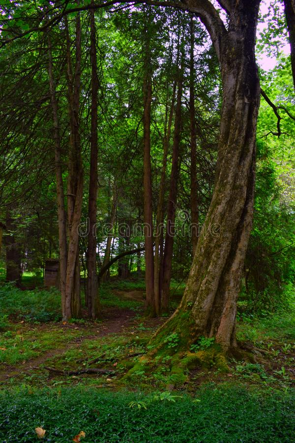 Dendropark Stepanavan in Armenia province of Lori. Dendropark in Lori Armenia a park full of landscapes, alleys, giant trees, flowers, lots of green space, fresh stock photo
