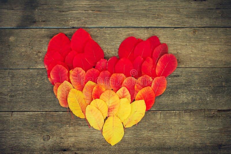 Denfärgade hösten lämnar lutning i form av hjärta fotografering för bildbyråer