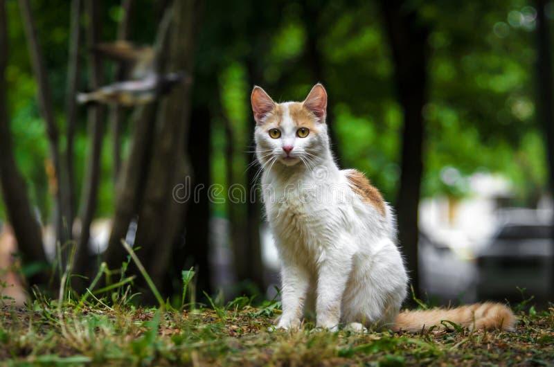 denfärgade katten i en grön trädgård vänds tillbaka och tvättas arkivfoton