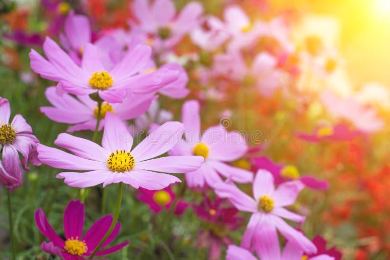 Denfärgade våren blommar naturen arkivbild