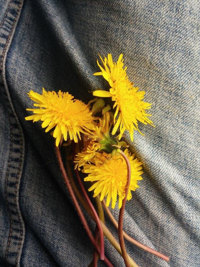 Denim & fioriture fotografie stock
