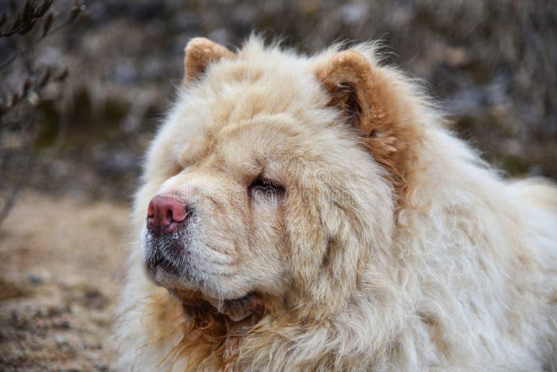 denkäk hunden fryser i kallt väder royaltyfri foto