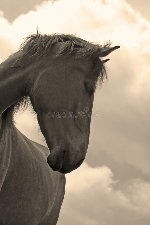 Denkend paard royalty-vrije stock afbeelding