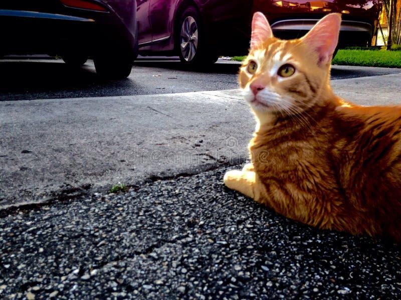 Denkende kat royalty-vrije stock afbeeldingen