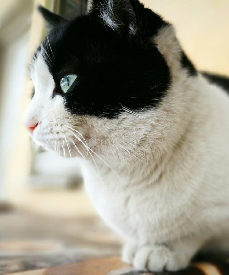 Denkende Katze stockfoto
