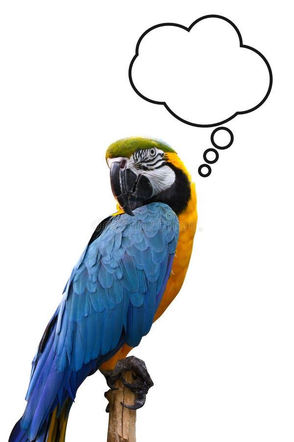 Denkender Vogel lizenzfreies stockfoto